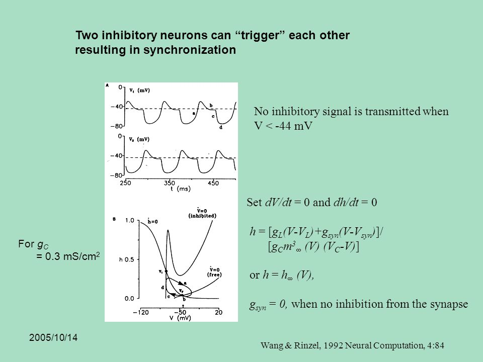 2005/10/14 Two inhibitory neurons can trigger each other resulting in synchronization For g C = 0.3 mS/cm 2 Wang & Rinzel, 1992 Neural Computation, 4:84 Set dV/dt = 0 and dh/dt = 0 h = [g L (V-V L )+g syn (V-V syn )]/ [g C m 3  (V) (V C -V)] or h = h  (V), g syn = 0, when no inhibition from the synapse No inhibitory signal is transmitted when V < -44 mV