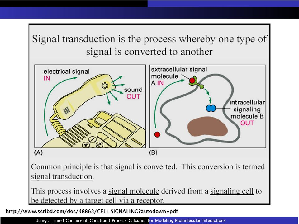 http://www.scribd.com/doc/48863/CELL-SIGNALING autodown=pdf