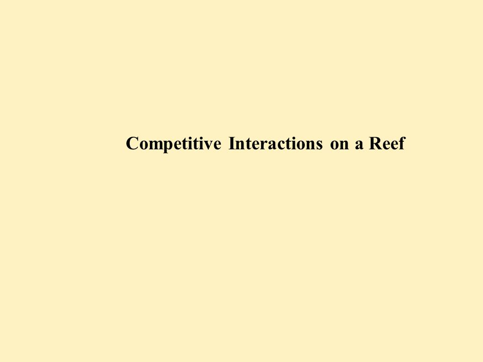 Kinds of Competition between Corals Connell ('73) Contact and interaction between soft tissues of coral No contact between coral colonies Direct CompetitionIndirect Competition