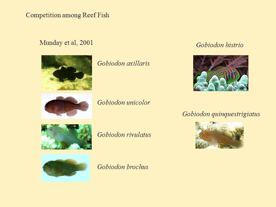 Competition among Reef Fish Munday et al, 2001 Gobiodon axillaris Gobiodon unicolor Gobiodon rivulatus Gobiodon brochus Gobiodon histrio Gobiodon quinquestrigiatus