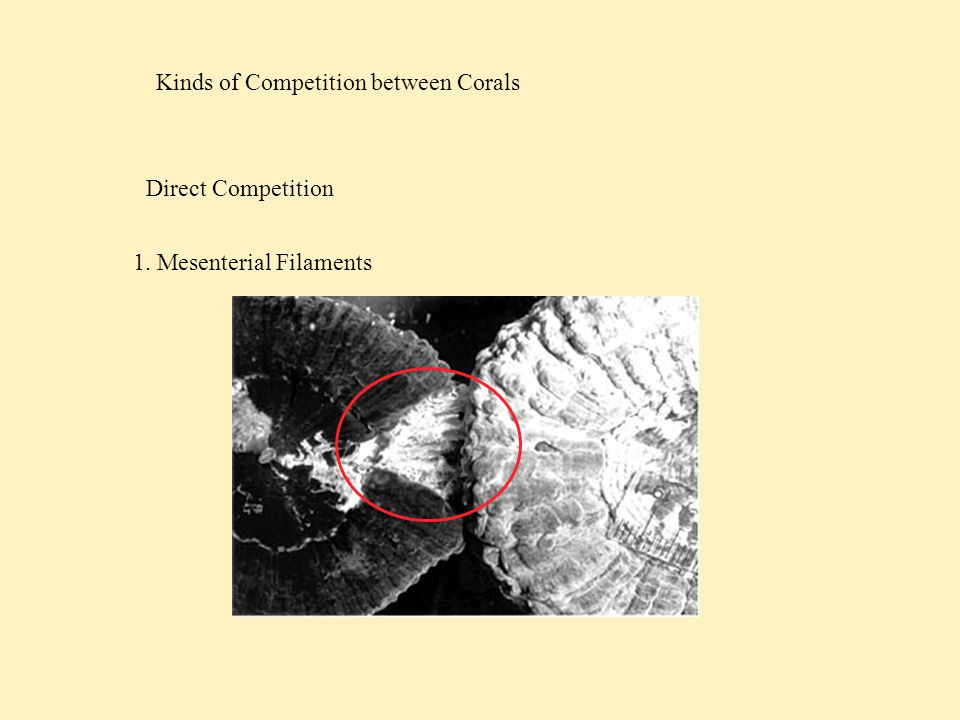 Competition among Reef Fish Munday et al, 2001 Lizard Island