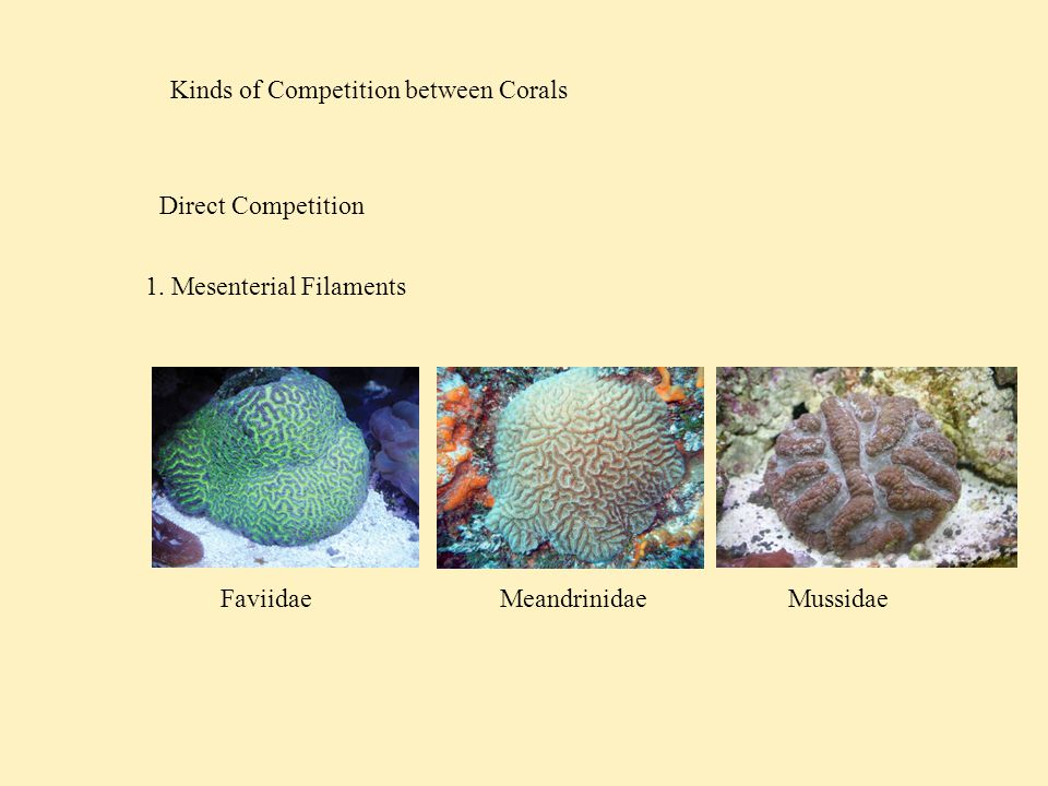 Kinds of Competition between Corals Direct Competition 2. Sweeper Tentacles