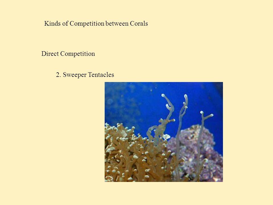 Competition and New Recruits Vermeij, '06 Overgrowth Crustose corallines Sponges Macroalgae Sponges Crustose corallines Ascidians