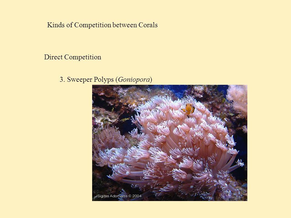 Competition among Reef Fish Munday et al, 2001 Acropora gemmifera Acropora nasuta Commonly usedOccasionally used