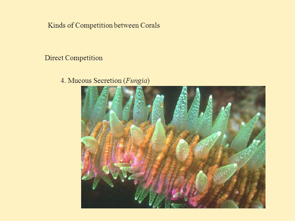Kinds of Competition between Corals Direct Competition 5. Histoincompatibility
