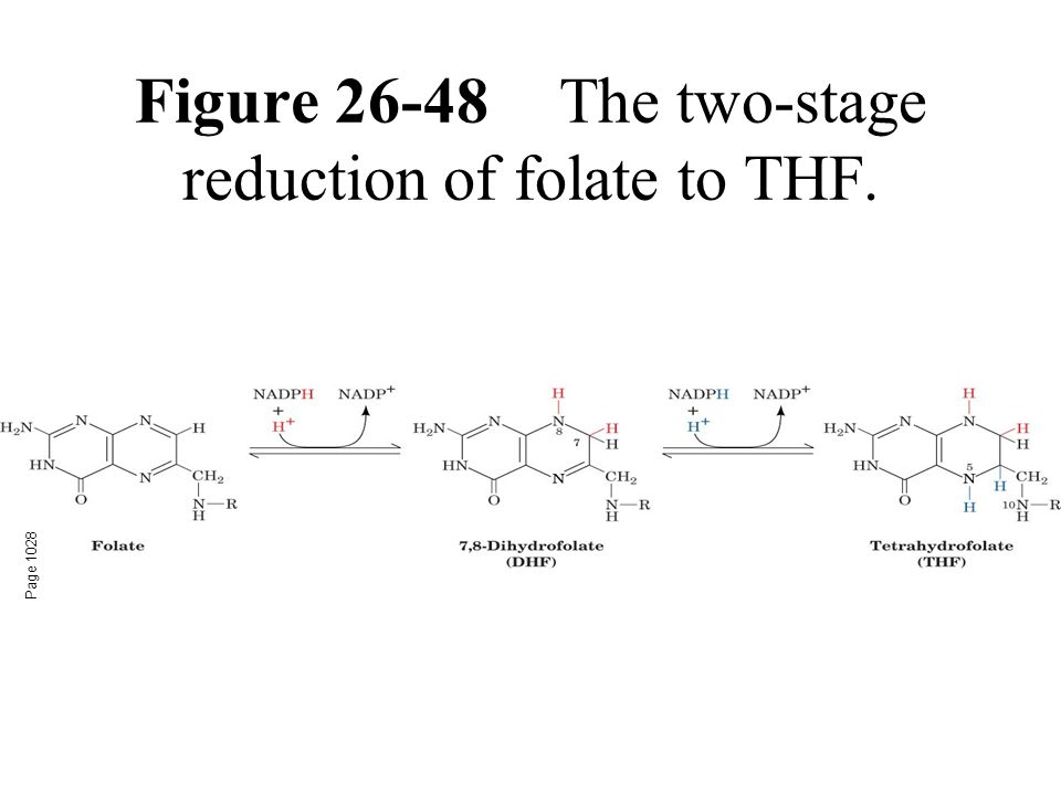 Figure 26-48The two-stage reduction of folate to THF. Page 1028