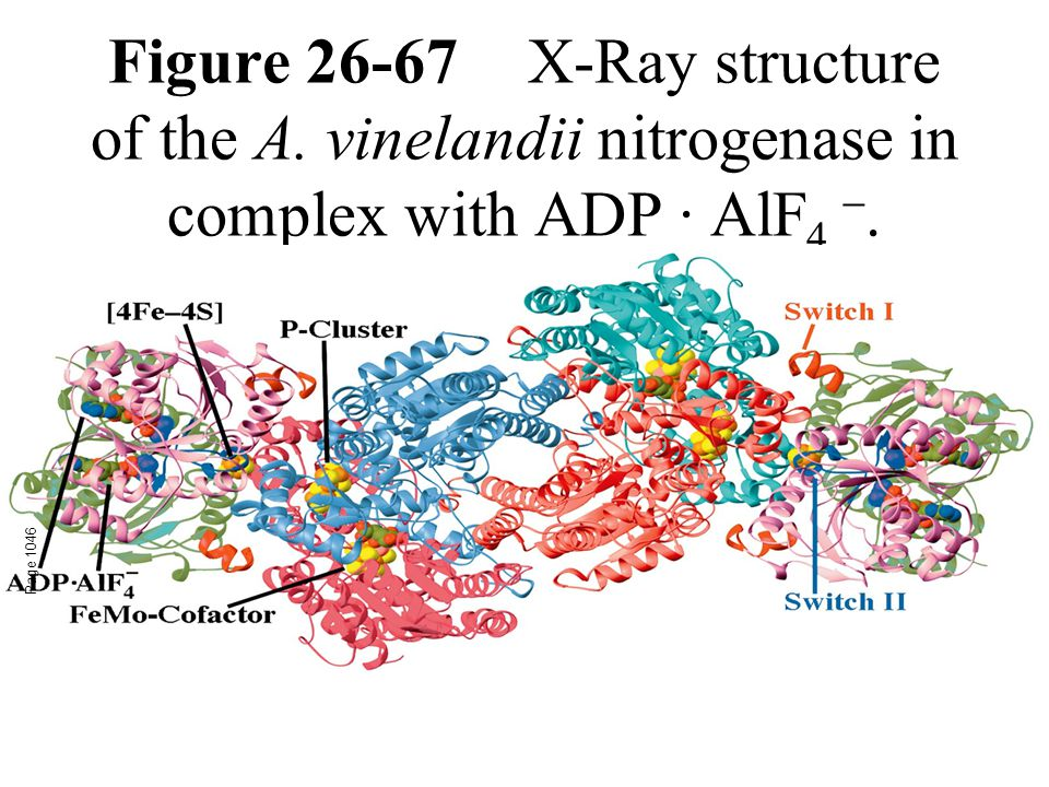 Figure 26-67X-Ray structure of the A. vinelandii nitrogenase in complex with ADP · AlF 4 .