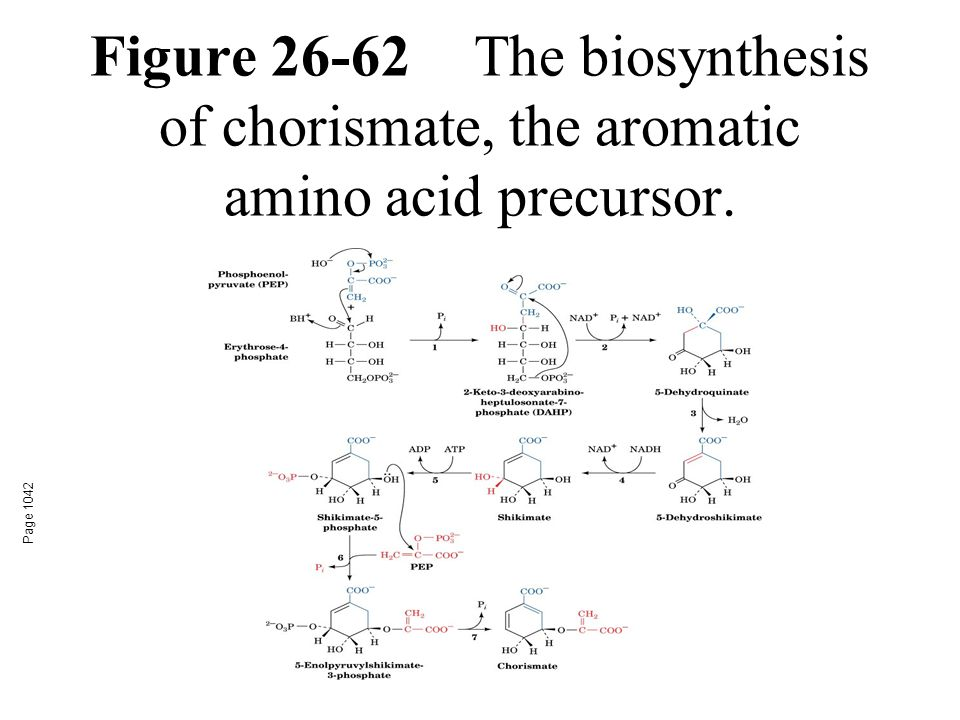 Figure 26-62The biosynthesis of chorismate, the aromatic amino acid precursor. Page 1042