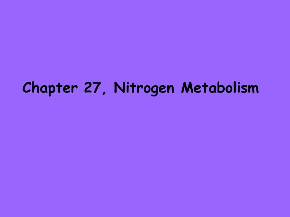 Chapter 27, Nitrogen Metabolism