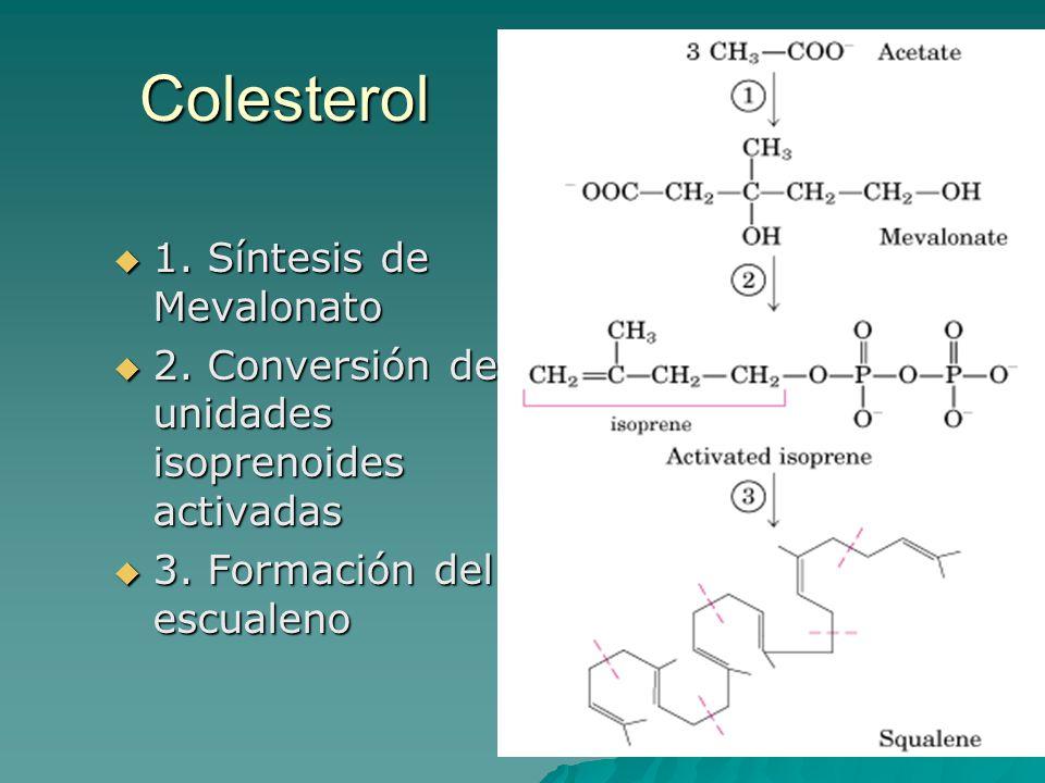 Colesterol  1. Síntesis de Mevalonato  2. Conversión de unidades isoprenoides activadas  3. Formación del escualeno