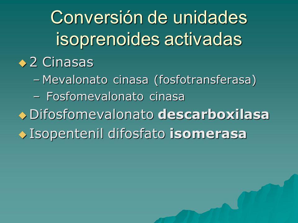 Conversión de unidades isoprenoides activadas  2 Cinasas –Mevalonato cinasa (fosfotransferasa) – Fosfomevalonato cinasa  Difosfomevalonato descarbox