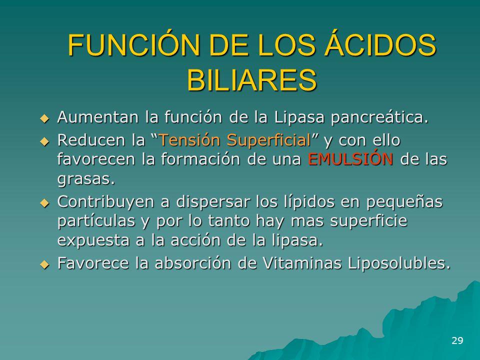 """29 FUNCIÓN DE LOS ÁCIDOS BILIARES  Aumentan la función de la Lipasa pancreática.  Reducen la """"Tensión Superficial"""" y con ello favorecen la formación"""