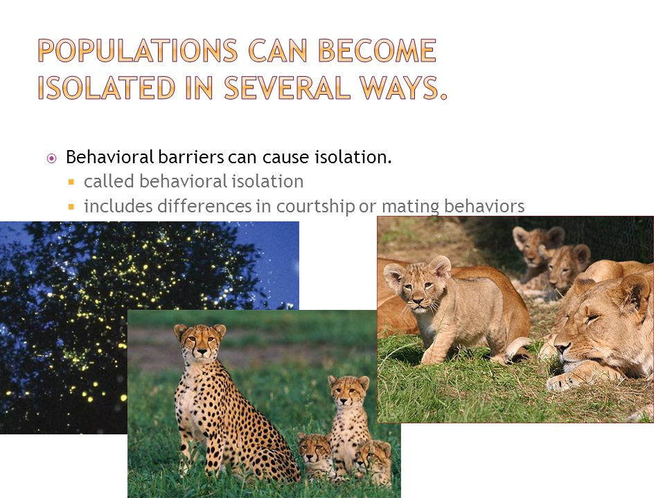  Behavioral barriers can cause isolation.  called behavioral isolation  includes differences in courtship or mating behaviors