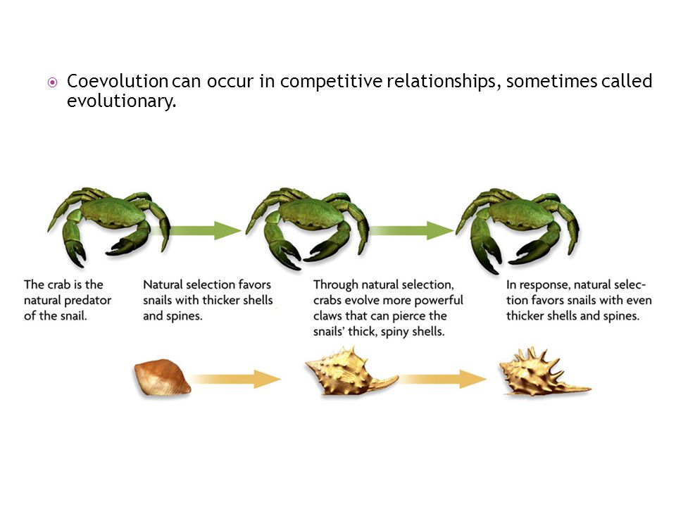  Coevolution can occur in competitive relationships, sometimes called evolutionary.