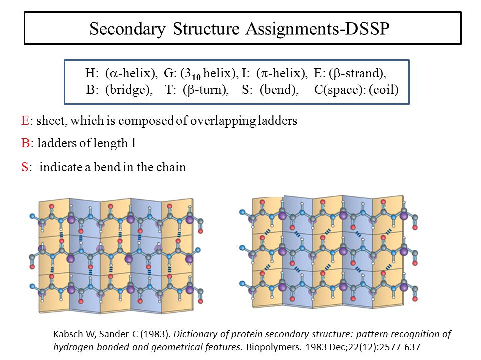 Kabsch W, Sander C (1983). Dictionary of protein secondary structure: pattern recognition of hydrogen-bonded and geometrical features. Biopolymers. 19