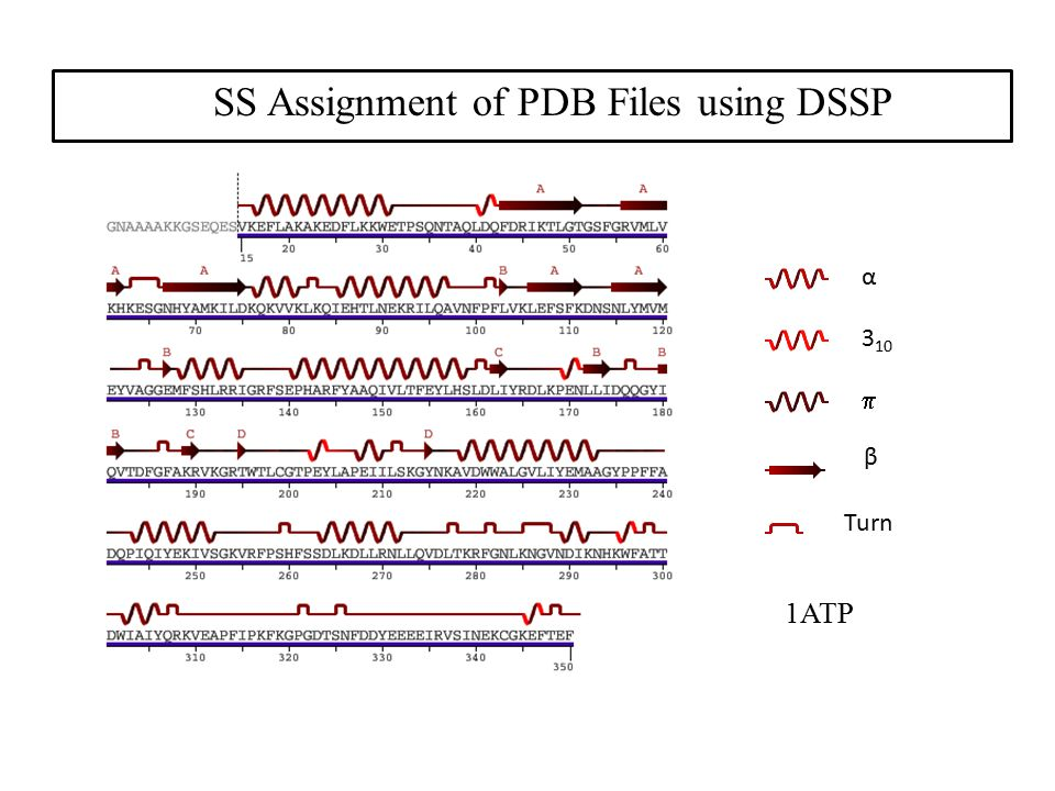 1ATP α 3 10  β Turn SS Assignment of PDB Files using DSSP