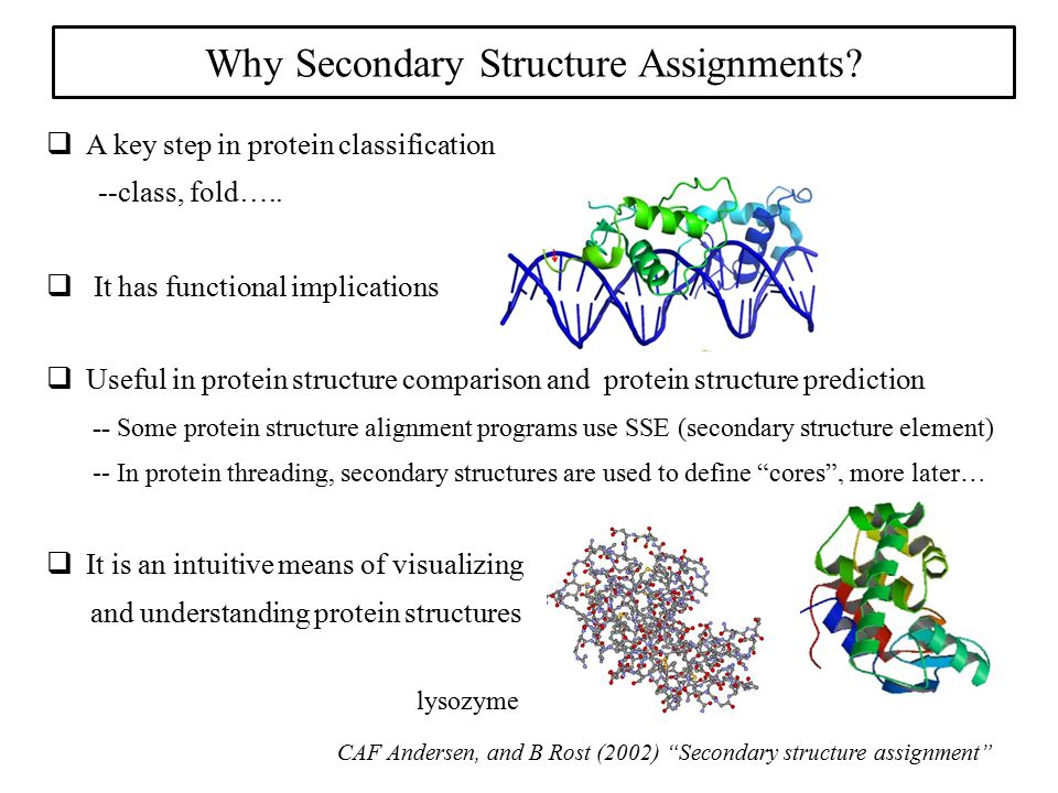 Why Secondary Structure Assignments?  A key step in protein classification --class, fold…..  It has functional implications  Useful in protein stru