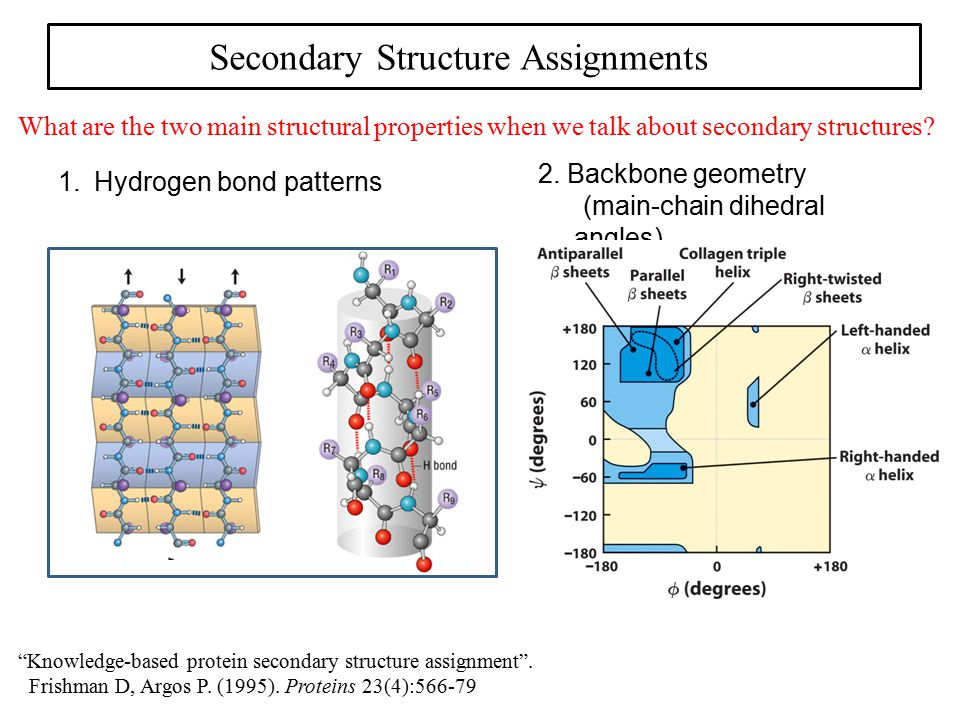 "Secondary Structure Assignments What are the two main structural properties when we talk about secondary structures? 1. Hydrogen bond patterns ""Knowle"