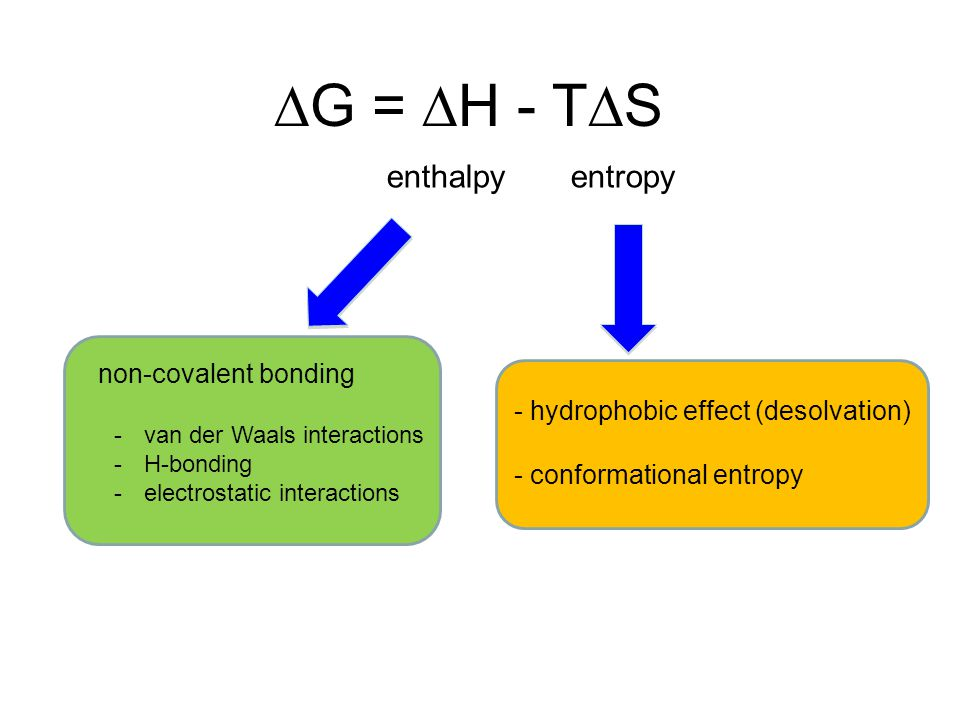  G =  H - T  S enthalpyentropy non-covalent bonding - hydrophobic effect (desolvation) - conformational entropy -van der Waals interactions -H-bonding -electrostatic interactions