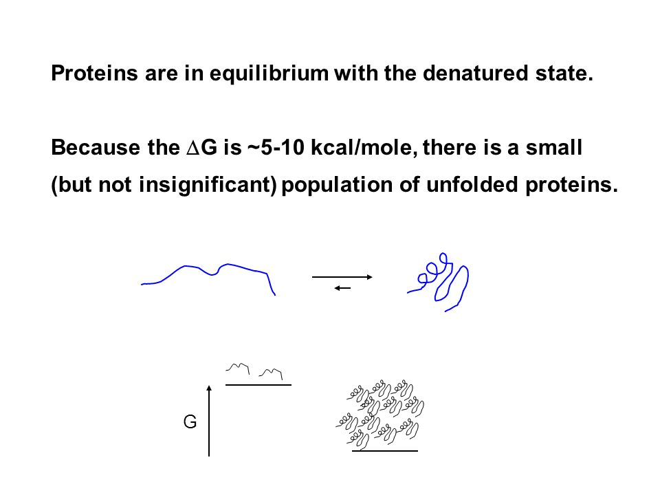 Proteins are in equilibrium with the denatured state.