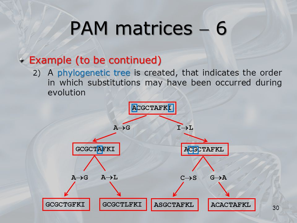PAM matrices  6 30 Example (to be continued) phylogenetic tree 2) A phylogenetic tree is created, that indicates the order in which substitutions may