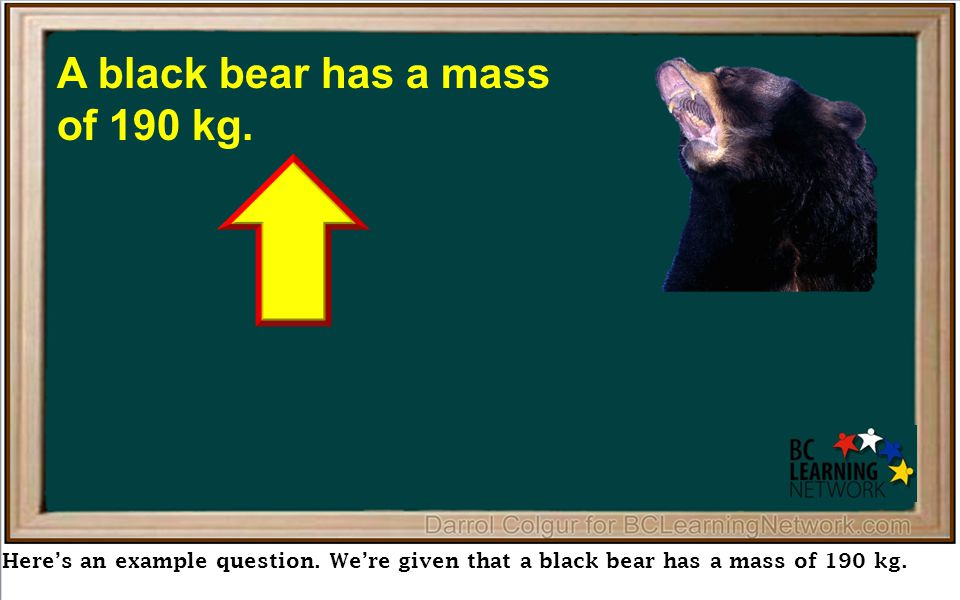 Here's an example question. We're given that a black bear has a mass of 190 kg.