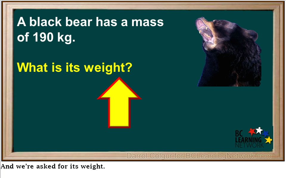 And we're asked for its weight. A black bear has a mass of 190 kg. What is its weight