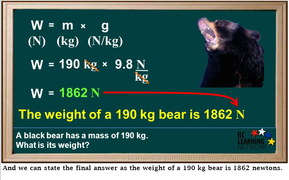 kg And we can state the final answer as the weight of a 190 kg bear is 1862 newtons.