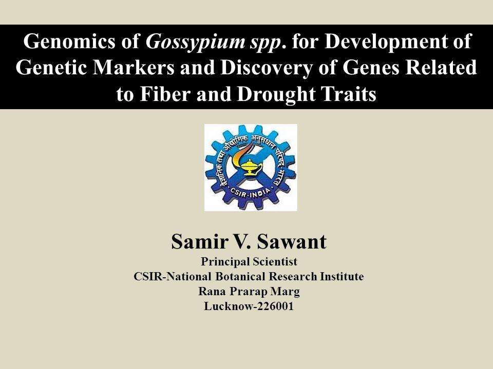 G.raimondii (JGI) G. raimondii (Chinese draft) SSRs SNPs Distribution of G.