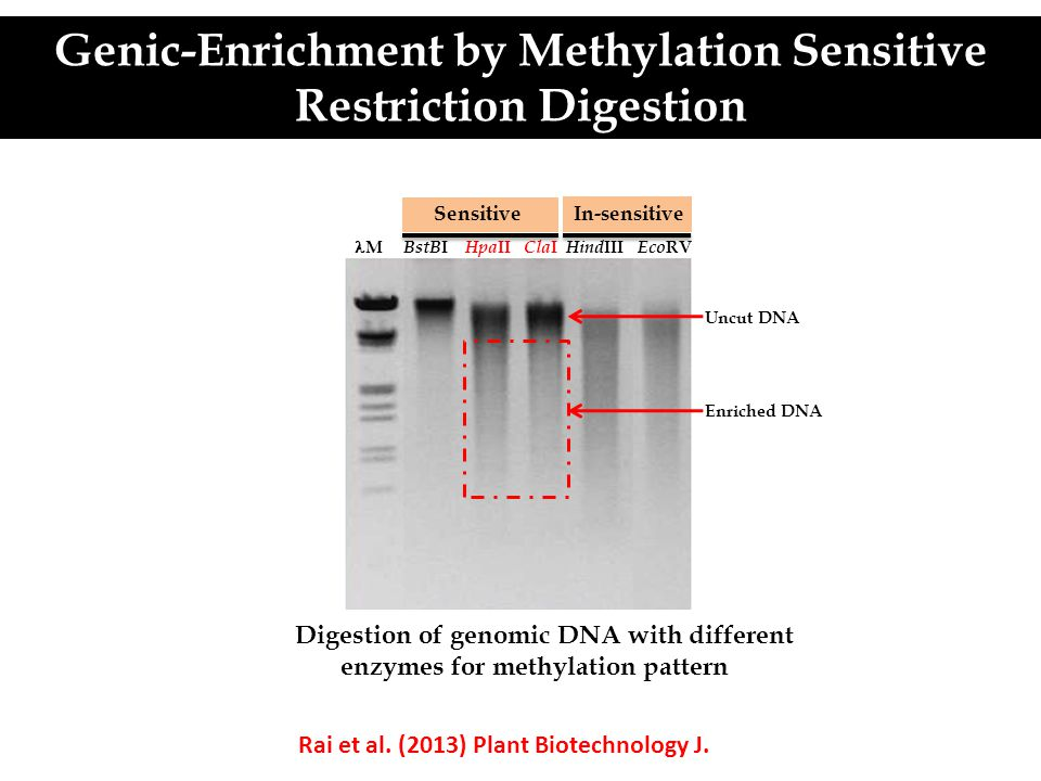 Development & Characterization of gSSRs and eSSRs in Diploid Cotton (G.
