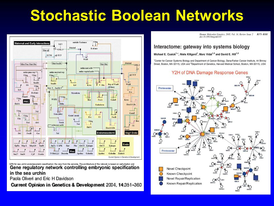 Stochastic Boolean Networks