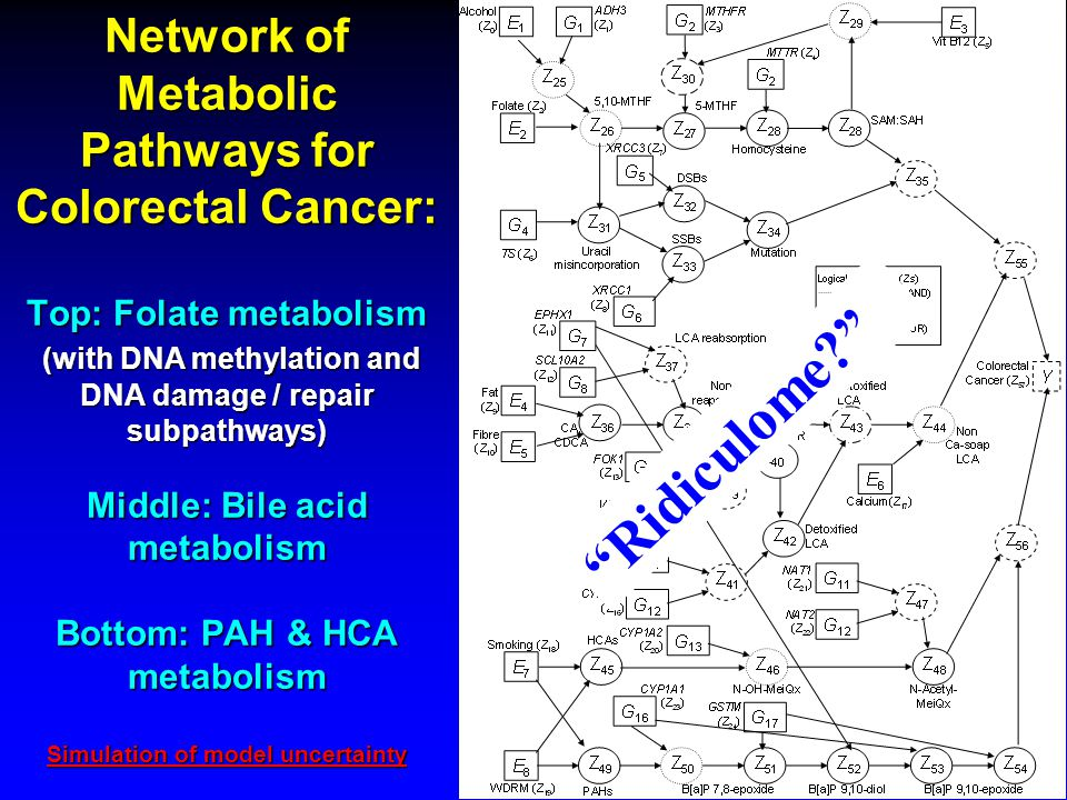 Network of Metabolic Pathways for Colorectal Cancer: Top: Folate metabolism (with DNA methylation and DNA damage / repair subpathways) Middle: Bile acid metabolism Bottom: PAH & HCA metabolism Simulation of model uncertainty Simulation of model uncertainty Simulation of model uncertainty Ridiculome?