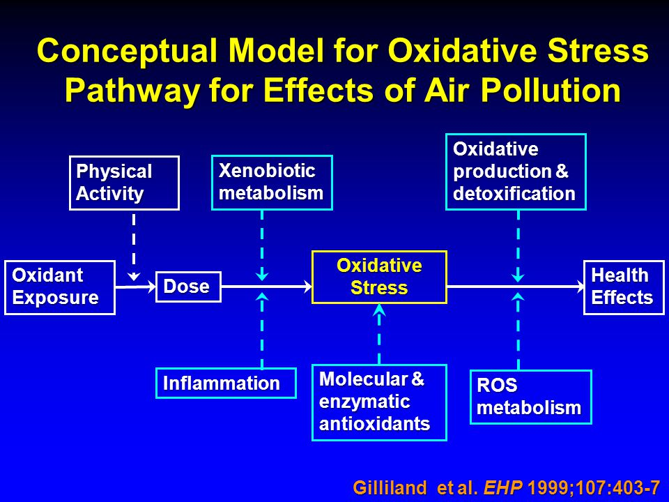 Conceptual Model for Oxidative Stress Pathway for Effects of Air Pollution Oxidant Exposure Oxidative Stress Health Effects Molecular & enzymatic antioxidants Dose Physical Activity ROS metabolism Xenobiotic metabolism Oxidative production & detoxification Inflammation Gilliland et al.