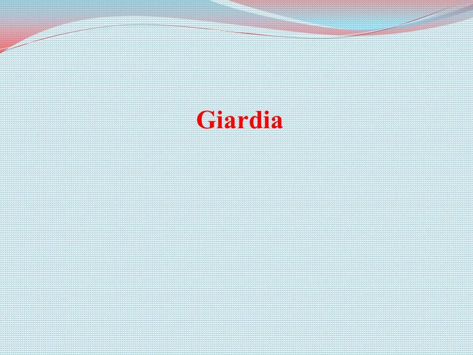 Giardia