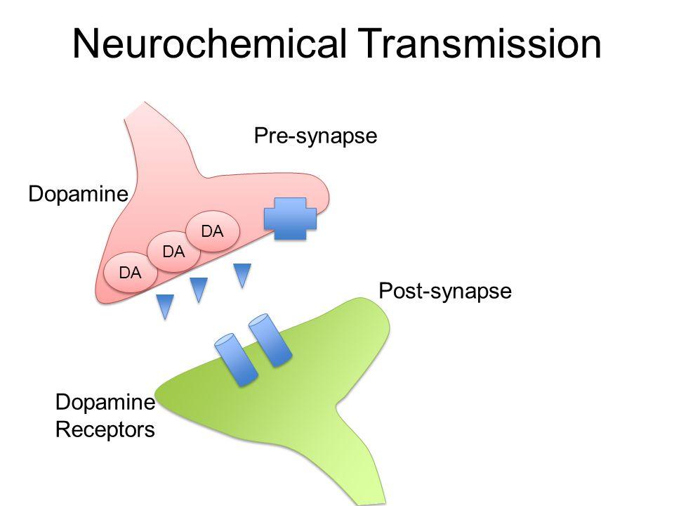 Neurochemical Transmission DA Pre-synapse Post-synapse Dopamine Receptors