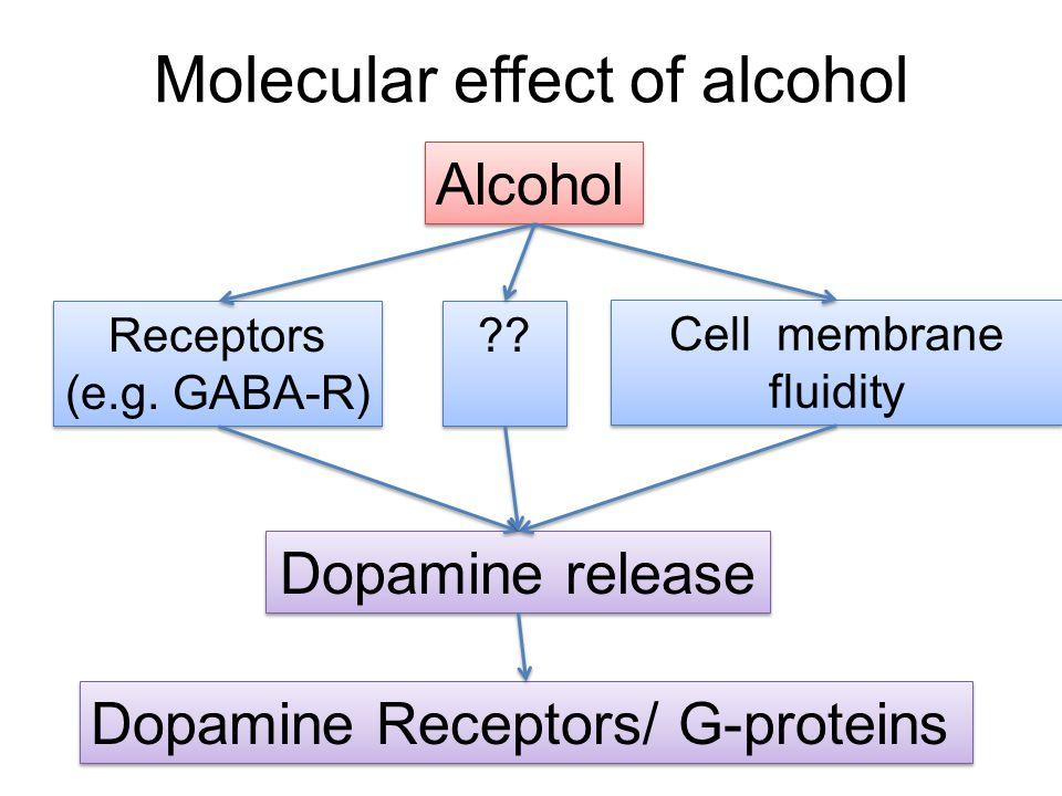 Molecular effect of alcohol Alcohol Receptors (e.g.