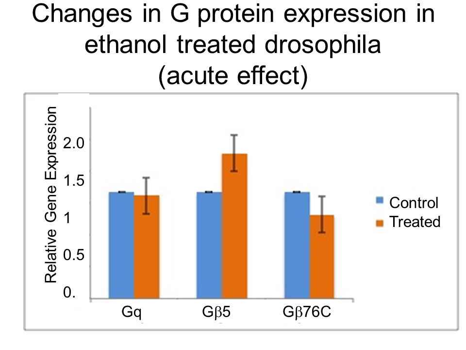 Changes in G protein expression in ethanol treated drosophila (acute effect) Relative Gene Expression Gq G  5 G  76C Control Treated 2.0 1.5 1 0.5 0.