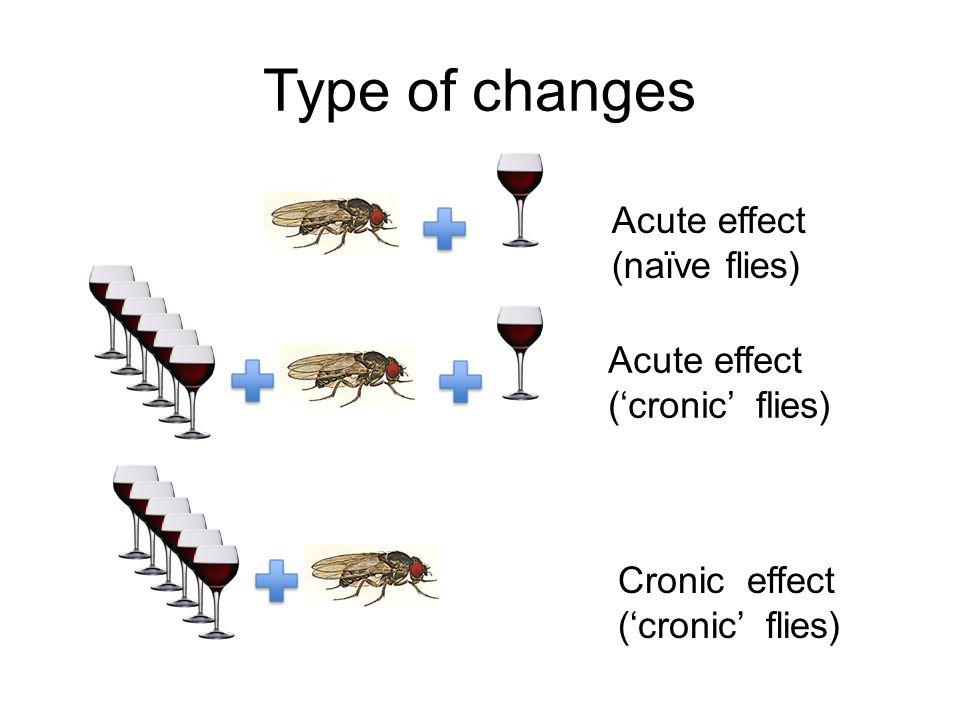 Type of changes Acute effect (naïve flies) Acute effect ('cronic' flies) Cronic effect ('cronic' flies)