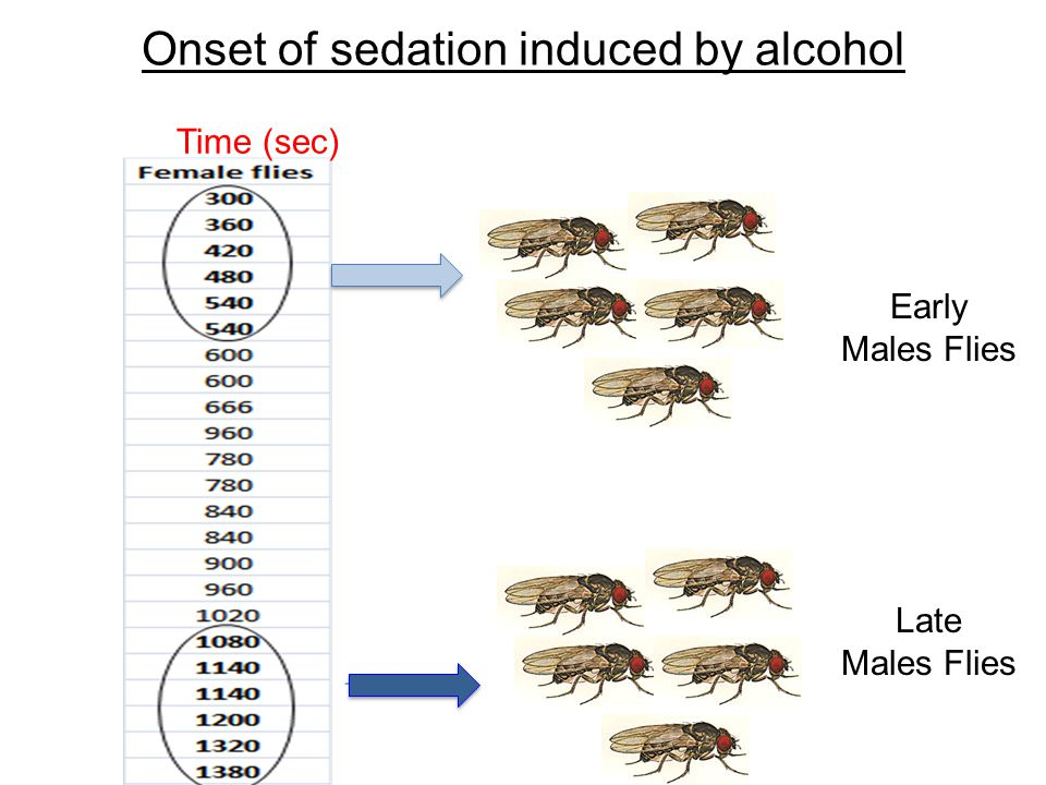 Onset of sedation induced by alcohol Time (sec) Early Males Flies Late Males Flies