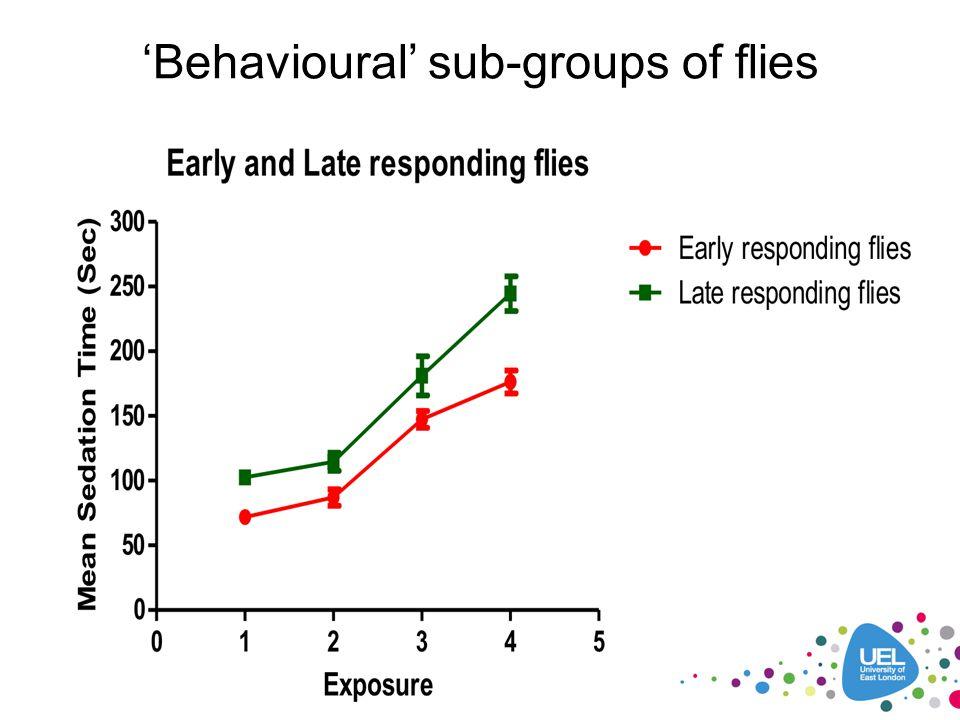 'Behavioural' sub-groups of flies