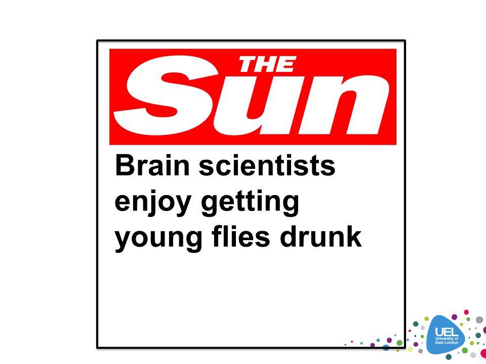 Brain scientists enjoy getting young flies drunk