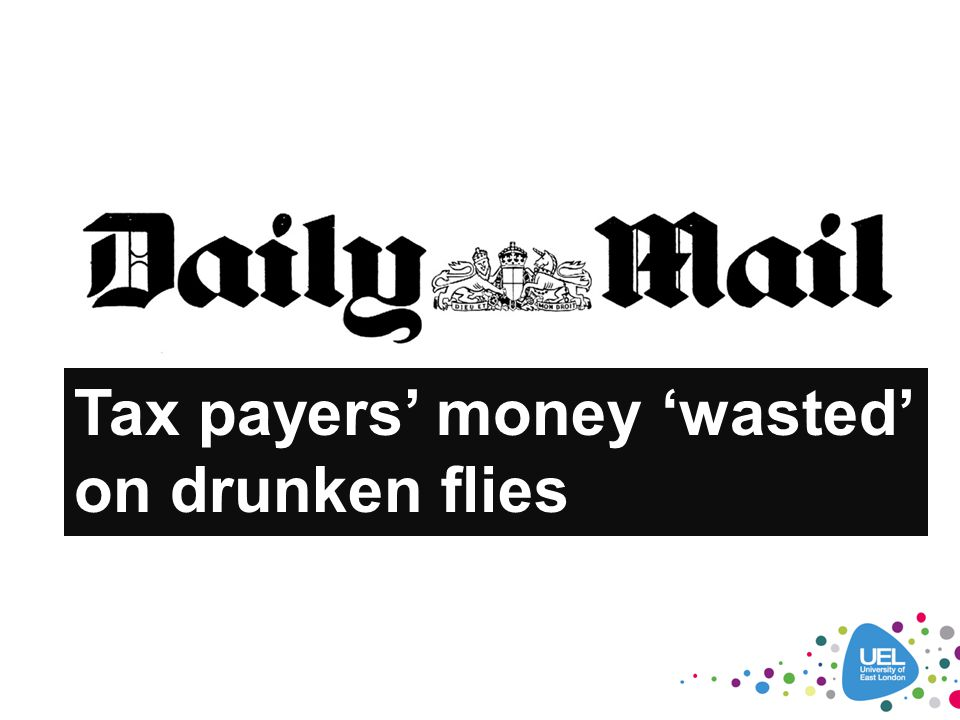 Tax payers' money 'wasted' on drunken flies