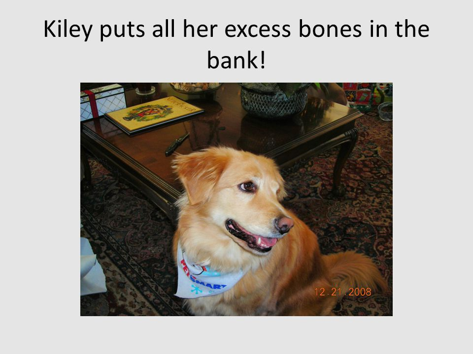Kiley puts all her excess bones in the bank!