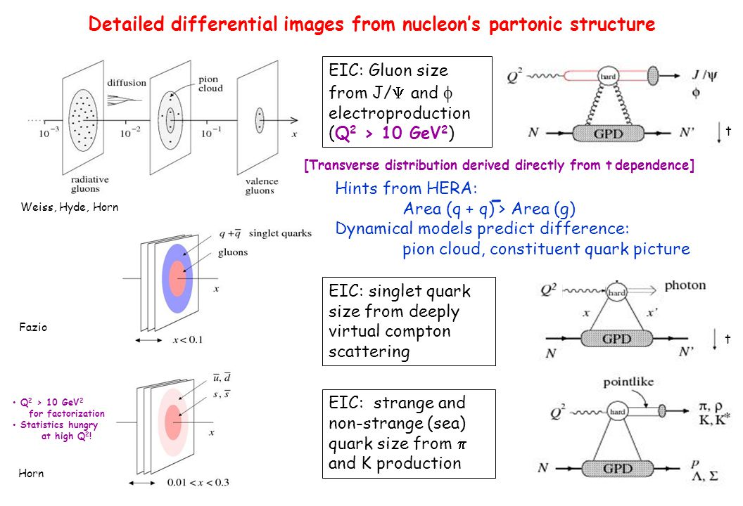 Detailed differential images from nucleon's partonic structure EIC: Gluon size from J/  and  electroproduction (Q 2 > 10 GeV 2 ) [Transverse distribution derived directly from t  dependence] t Hints from HERA: Area (q + q) > Area (g) Dynamical models predict difference: pion cloud, constituent quark picture - t EIC: singlet quark size from deeply virtual compton scattering EIC: strange and non-strange (sea) quark size from  and K production Q 2 > 10 GeV 2 for factorization Statistics hungry at high Q 2 .