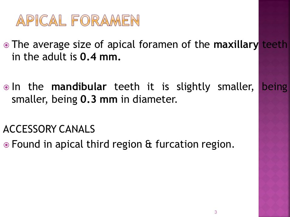  The average size of apical foramen of the maxillary teeth in the adult is 0.4 mm.  In the mandibular teeth it is slightly smaller, being smaller, b