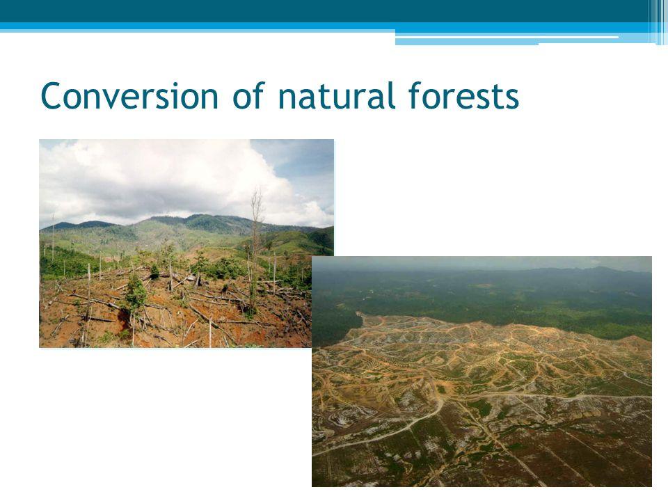 High carbon emissions, esp. on peat