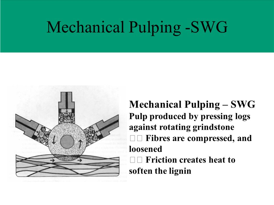 Mechanical Pulping – SWG Pulp produced by pressing logs against rotating grindstone Fibres are compressed, and loosened Friction creates heat to soften the lignin Mechanical Pulping -SWG
