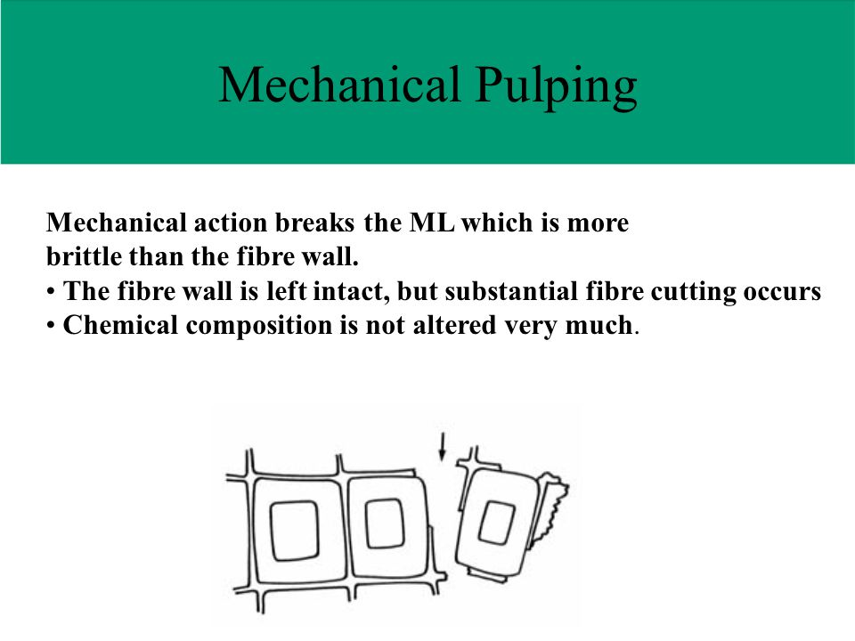 Mechanical action breaks the ML which is more brittle than the fibre wall.
