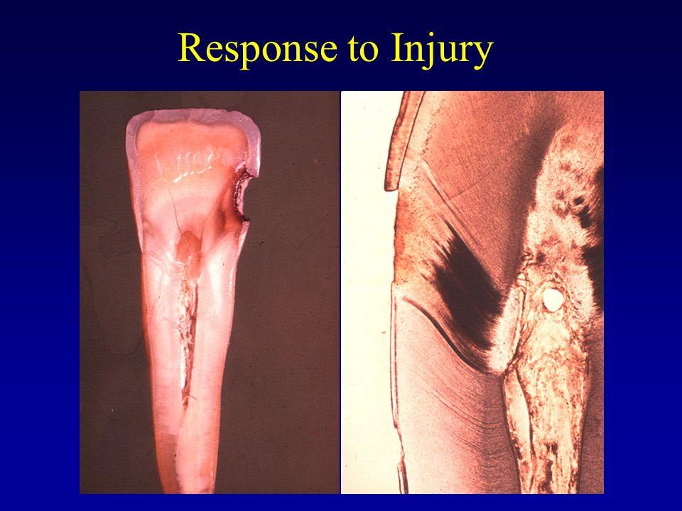 Response to Injury