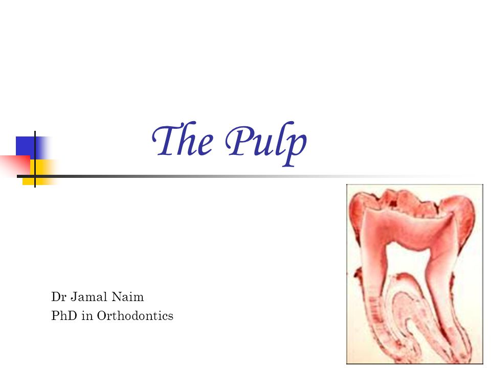 Dr Jamal Naim PhD in Orthodontics The Pulp